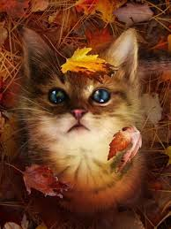 31 best cats thanksgiving images on cats thanksgiving