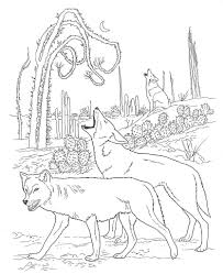 coyote coloring pages show this interesting animal in all its