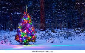 christmas tree with snow christmas tree lights snow woods stock photos christmas tree