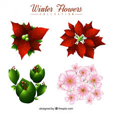 christmas flowers set of christmas flowers and other winter plants vector free