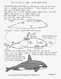 how to draw worksheets for the young artist how to draw an orca