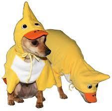 Duck Halloween Costume 22 Halloween Costumes Images Animal Costumes