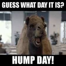 Hump Day Camel Meme - must be hump day laughter is the best medicine pinterest humor