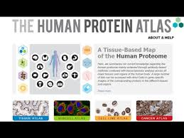 Atlas Help Citizen Science In Eve Online Players Help To Map Human Protein