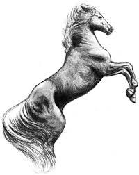 ferrari horse prancing horse by amarevia on deviantart