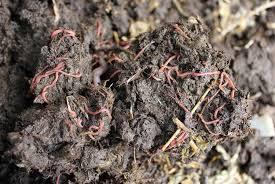 animal manure pod easy edible gardening