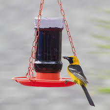 oriole bird house plans seque luxihome