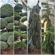tropical plants and specimen conifers at gaylord national harbor