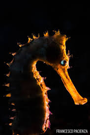 8 awesome seahorse photos from our underwater photo contest