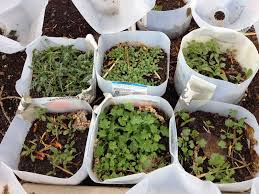 8 must read winter gardening tips one green planet