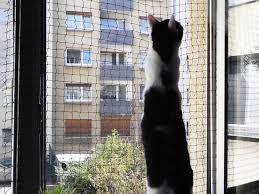 katzennetz balkon balkon katzennetz katzen forum catspot de