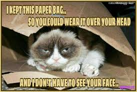 Mean Cat Meme - another grumpy cat meme by the other grumpy kat 2017 grumpy saves a