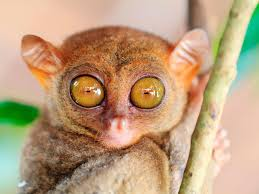 this animal u0027s eye makes up almost half of its body