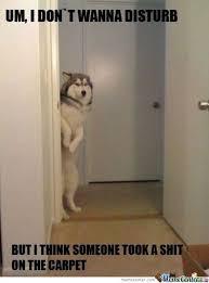 Shy Meme - shy dog by sierra115 meme center