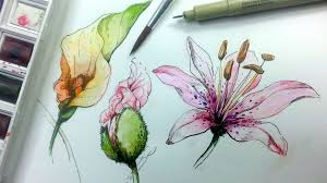 how to draw and paint flowers with pen and ink and watercolor as a