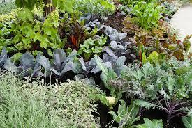 pretty vegetable garden growing with colorful ornamental varieties