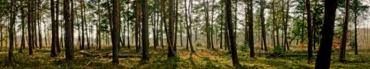 triple monitor multi screen multiple trees arbres foret forest