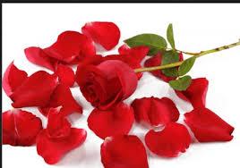 Silk Rose Petals Free Silk Rose Petals Free Shipping Hurry U2013 Savvy Wife Happy Life