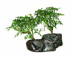 uncategorized bonsai tree decorations