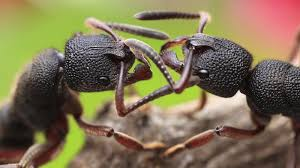 why ants handle traffic better than you do npr