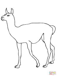 cute guanaco coloring page free printable coloring pages