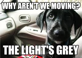 Dog Driving Meme - why aren t we moving the light s grey back seat dog quickmeme
