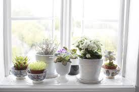home decorating plants window sill decorating ideas u2013 decoration image idea
