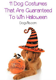 Halloween Costume Ideas For Pets 180 Best Golden Retriever Costumes Images On Pinterest Animals