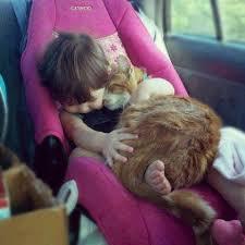 siege auto bebe fille bebe fille siege auto