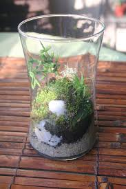 the rainforest garden my mossy terrarium