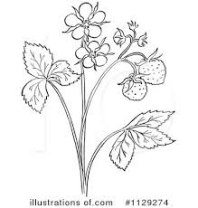 strawberry clipart 1129274 illustration by picsburg