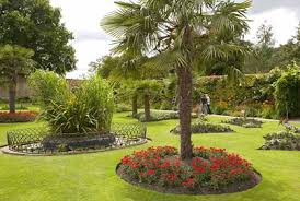 Ideas For Landscaping Backyard Best Trees For Landscaping Backyard Pictures Ideas