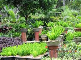 fox ferns for sale kinds of ornamental plants