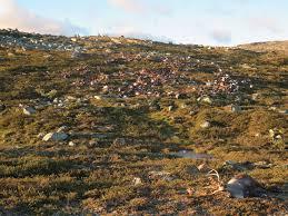 lightning strike kills 323 reindeer in norway the verge