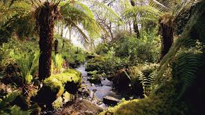 victorian native plants victorian fern garden