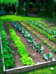 Veg Garden Ideas Vegetable Garden Plans For Beginners