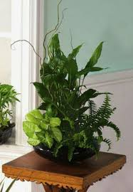 indoor plant arrangements pin by lisa currie on urban jungle pinterest