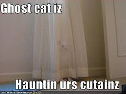 Scary Ghost Meme - ghost vs cat what s haunting your house smosh