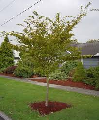 83 best small garden trees images on small garden