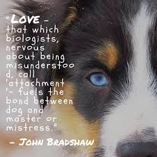 australian shepherd quotes dog quotes the ultimate list american kennel club