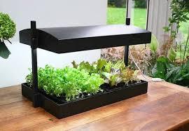 indoor planting indoor garden jpg