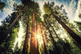the most beautiful trees on earth nature