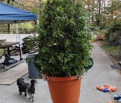 shrub bush plant costume 3 steps with pictures