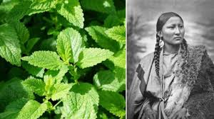 native medicinal plants 10 medicinal plants native americans used to cure everything from