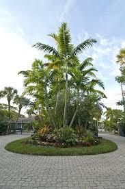 tropical tree u2013 simplir me