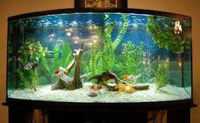 Live Plants In Community Aquariums fancy goldfish tank aquariums fish tanks ponds pinterest