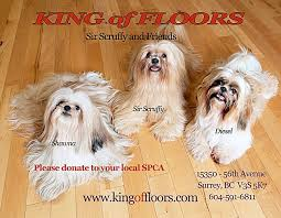 king of floors surrey 4 on floor and king floors in surrey bc