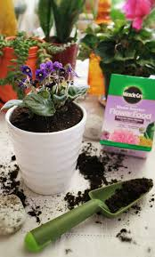 12 best boost your garden with miraclegro plant food images on