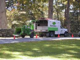 tree removal services performed by experts savatree
