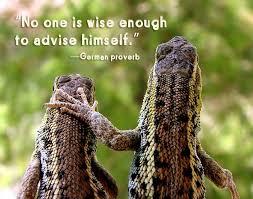 Seeking Lizard Wisdom Wednesday Seek Counsel Sweet Rains